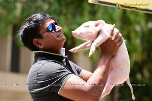 Allari Ravibabu with Piglet