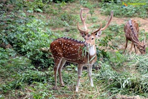 Bangalore Biological Park Safari