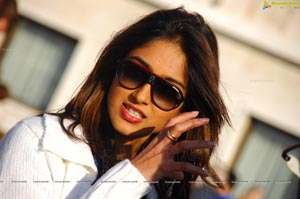 Bollywood Actress Ileana Photos